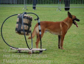 malinois hot dog FMBB 2016